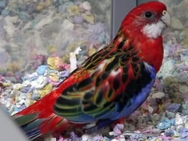 [DFW] Bird Shop Breaks Out the Party Favors