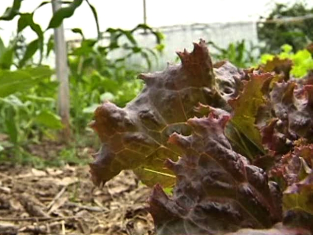 [DFW] Gardeners Throw Dirt on Proposed Community Garden Rules