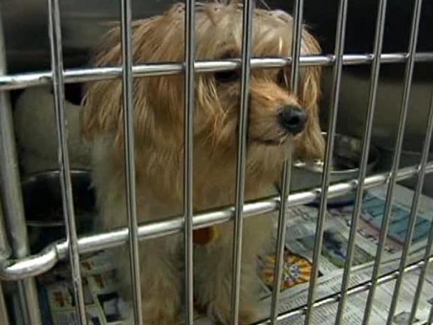 [DFW] Pet Surrenders Outpacing Adoptions