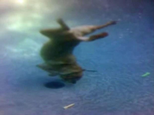 [DFW] Grady the Diving Dog