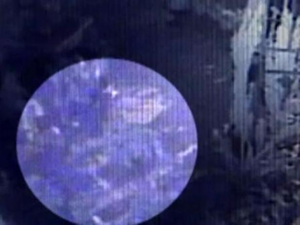 [DFW] Monkey Thief Surveillance Video