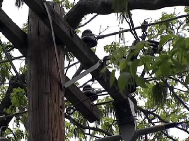 [DFW] Woman to Oncor: Keep Saws Away From My Trees