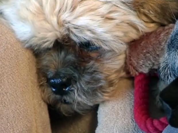 [DFW] Pet Hospice