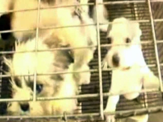 [DFW] Does Lone Star State Needs Puppy Mill Legislation?