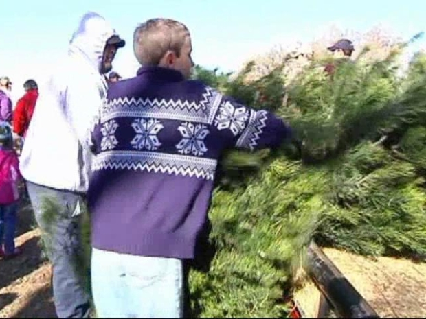 [DFW] Family Traditions Alive at Christmas Tree Farm