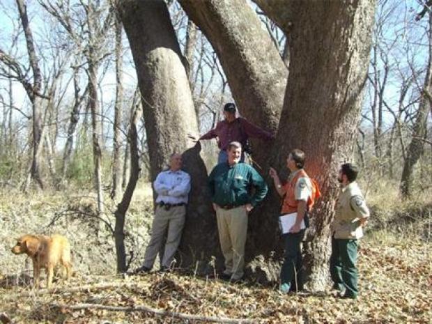 [DFW] State's Largest Known Tree Found in Metroplex