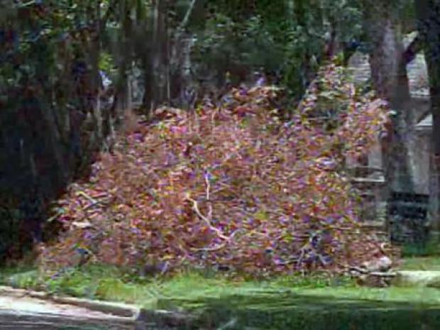 [DFW] Month-Old Storm Debris Now Fire Hazard: Residents