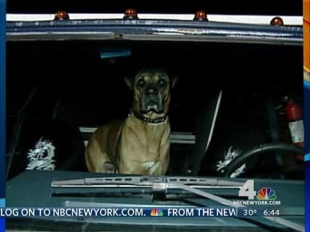 [NY] Dog Drives Van Into Coffee Shop