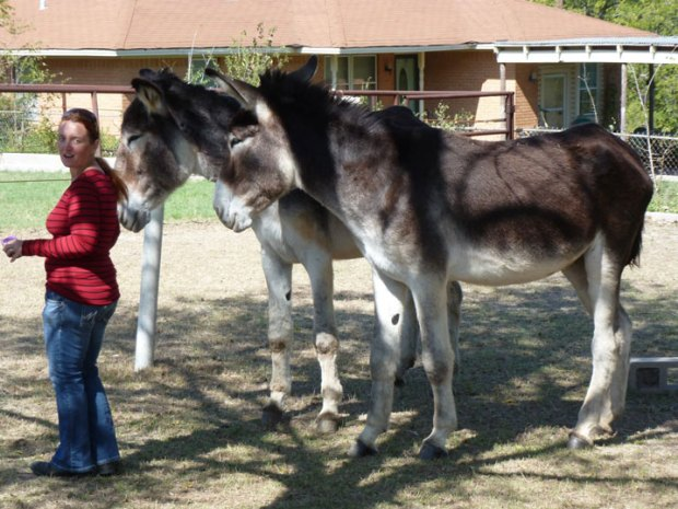 Photos: Romulus, World's Tallest Donkey