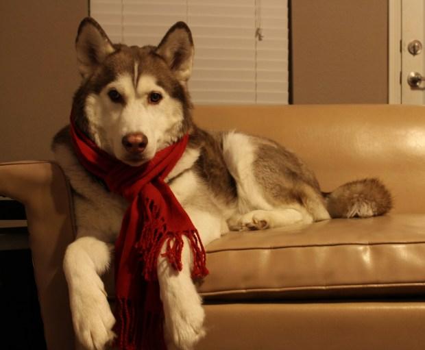 Holiday Photos: Christmas Pets
