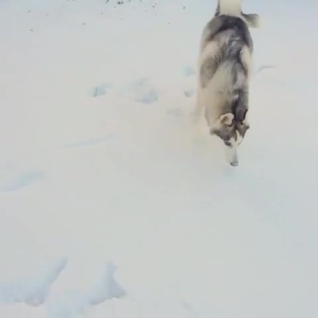 Fitz Playing in the Snow