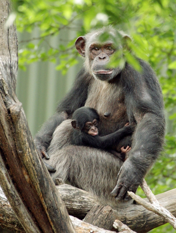 Say Hello To Primate Zoo Babies