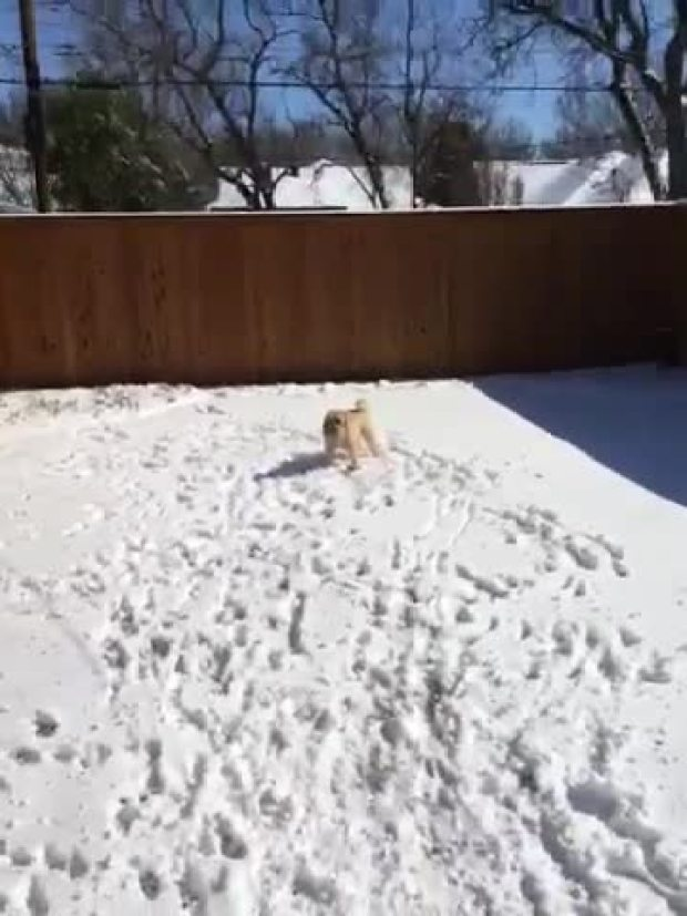 Finn playing in the snow..