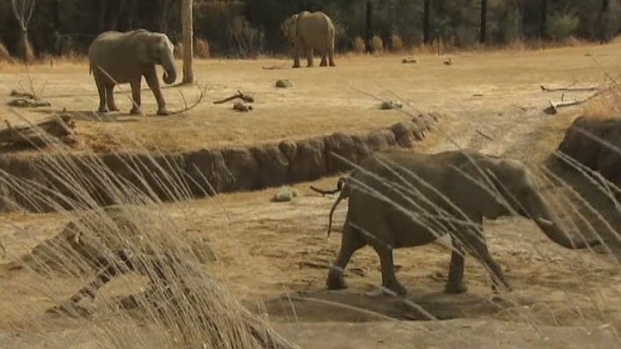[DFW] Controversial Zookeeper Resigns