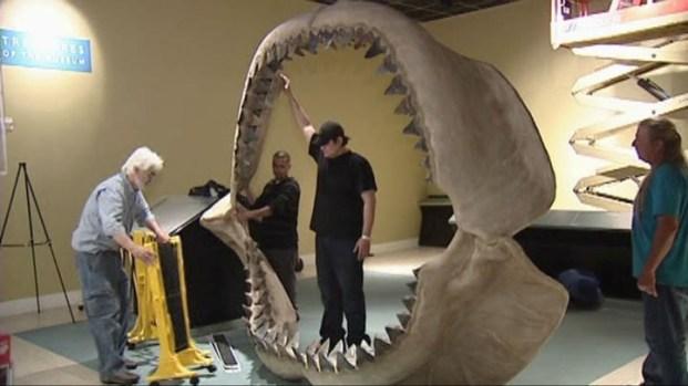 [DFW] Prehistoric Shark Teeth Auction