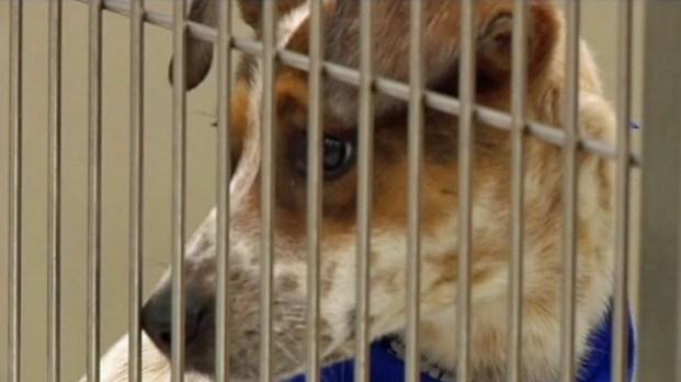 [DFW] Fort Worth and Petsmart Celebrate Partnership