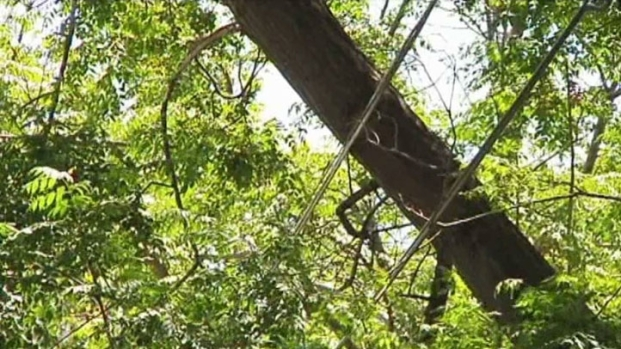 [DFW] Tree Trimming Controversy of a New Kind