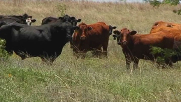 [DFW] Rancher Says Expect Beef Prices to Go Up