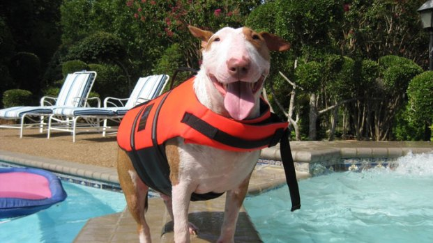 Dog Days of Summer 2011 - Gallery III