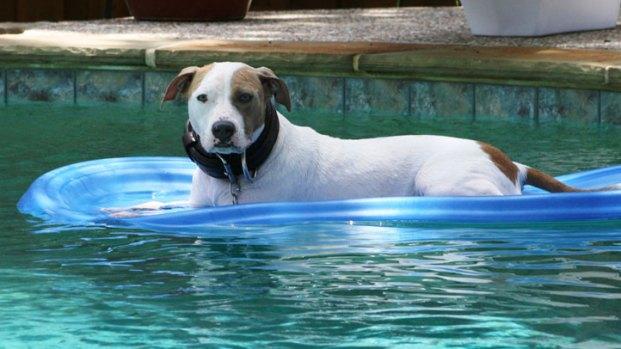Dog Days of Summer 2011 - Gallery IX