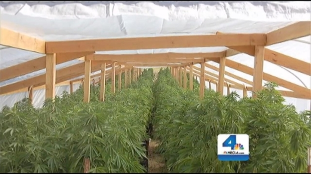 [LA] LA Girl Forced to Work on Pot Farm, Prosecutors Say