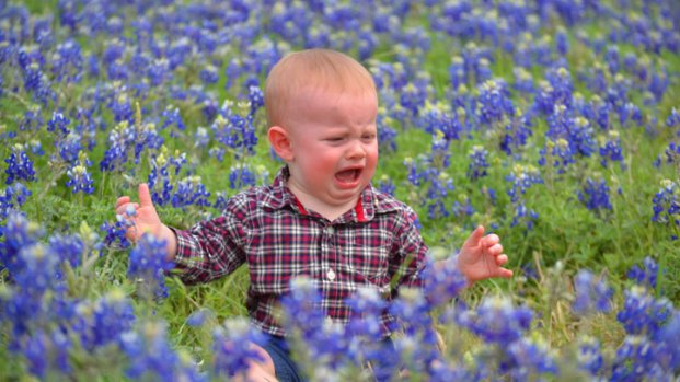 Bluebonnets in Bloom 2013 - Gallery I