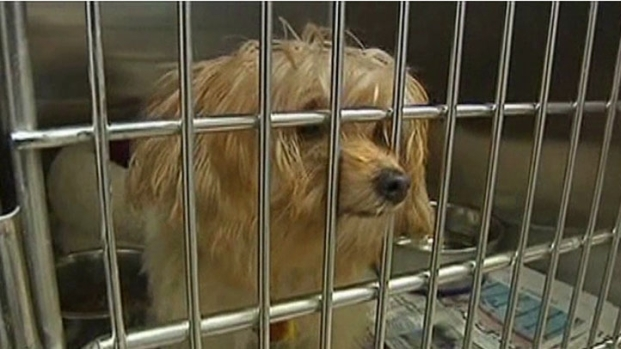 [DFW] Collin County Animal Shelter Overcrowded