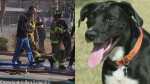 [DFW] Dog Fights for Life After Fire