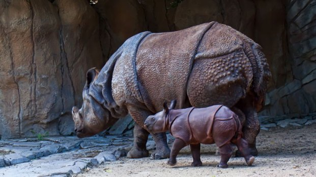 [DFW] Fort Worth Zoo Welcomes Baby Rhino