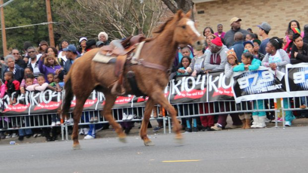Horse Briefly Runs Riderless in MLK Parade