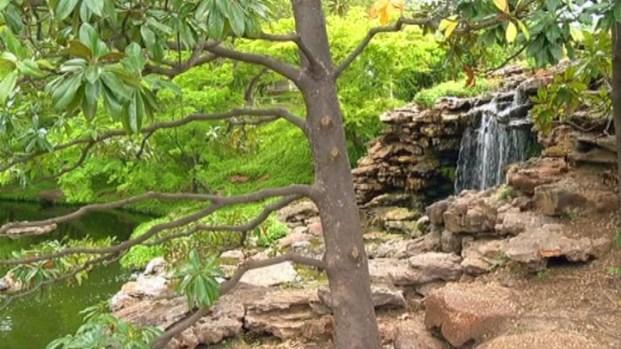 [DFW] Improvements in Bloom at Botanic Garden