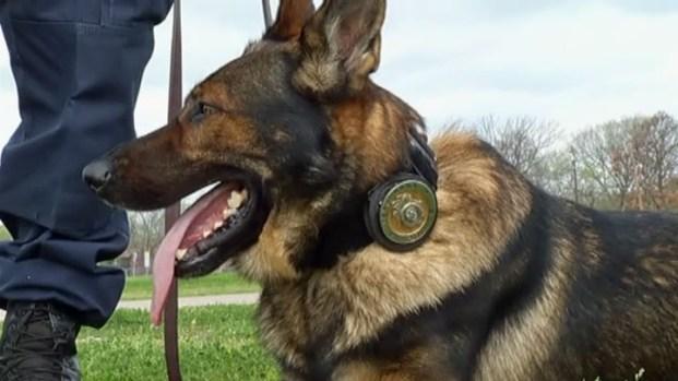 [DFW] K-9 Police Unit Trials