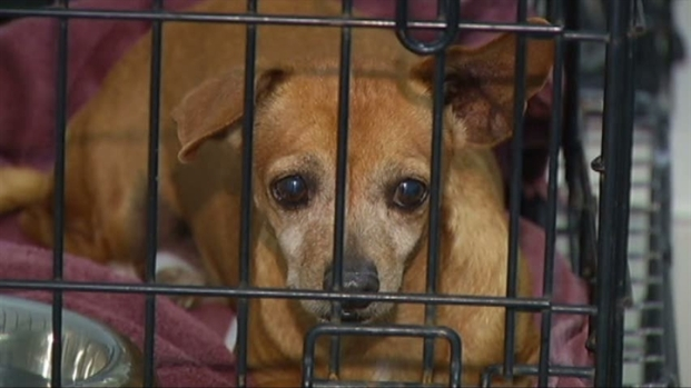 [DFW] Puppy Mill Bill Causes Controversy