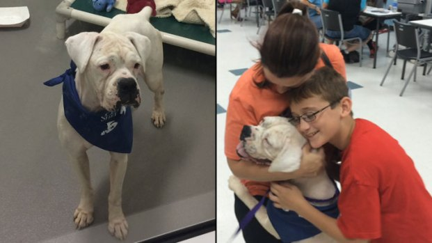 Thousands of Pets Find New Homes in Clear the Shelters