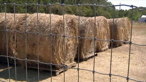 [DFW] Government for Help with Hay Shortage?