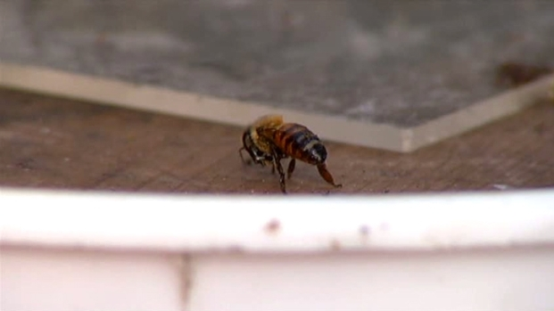 [DFW] Sweet Move: UNT Bee Colonies Relocated