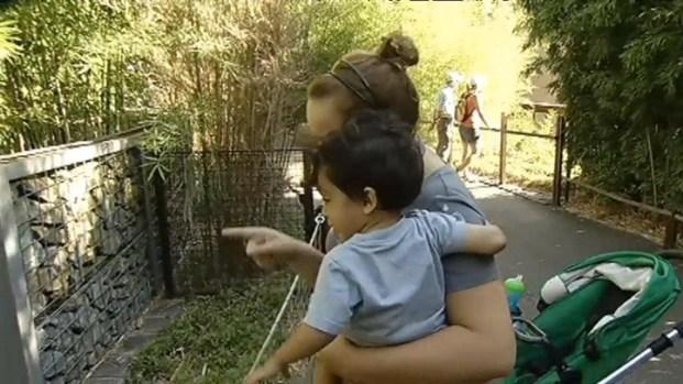 [DC] National Zoo Reveals Panda Cub's Sex