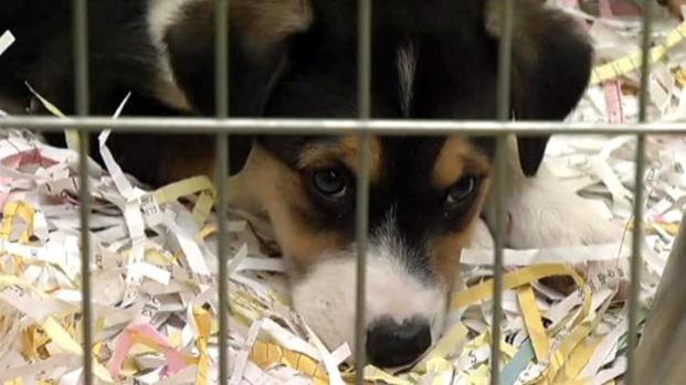 [DFW] Carrollton Shelter to Take in Some of Rescued Dogs