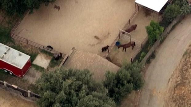 [LA] Bear Surprises Horses in Southern California Neighborhood