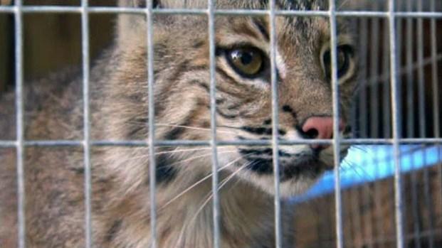 [DFW] Storm Damages Wildlife Rescue