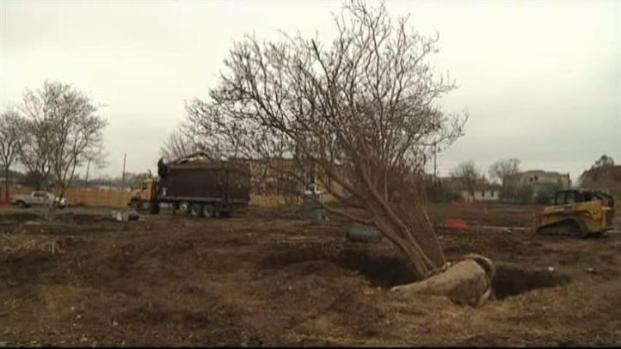 [DFW] Denton Group Protects Trees in Construction Sites