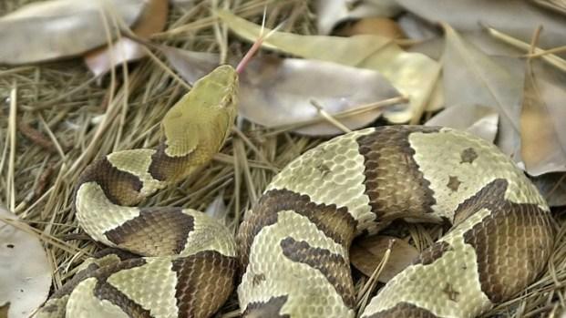 [DFW] Man Hospitalized for Snake Bite