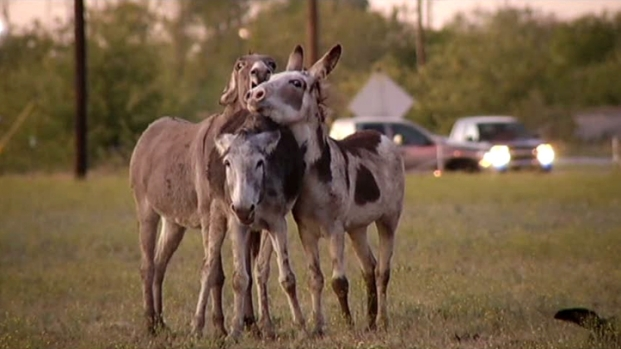 [DFW] Archer Shoots, Kills Two Donkeys
