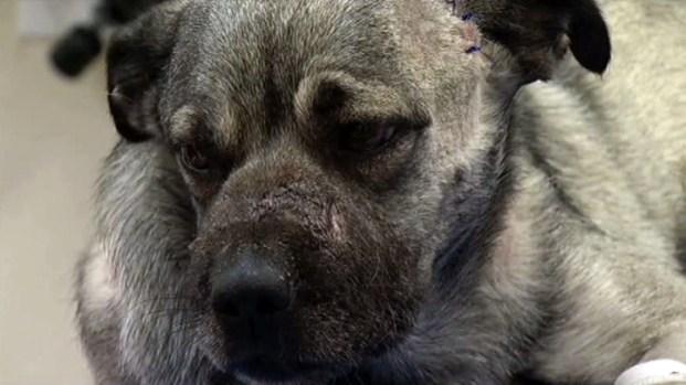 [DFW] Anonymous Donor Raises Reward in Dog Cruelty Case