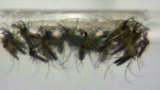 [DFW] Denton Mosquito Risk Level 5