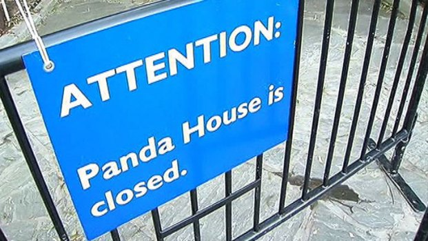 [DC] Zoo: Panda Cub Had Fluid in Abdomen
