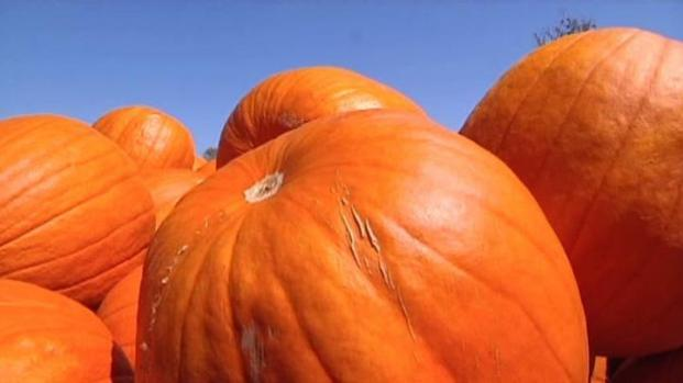 [DFW] Drought Also Hitting Pumpkin Patches