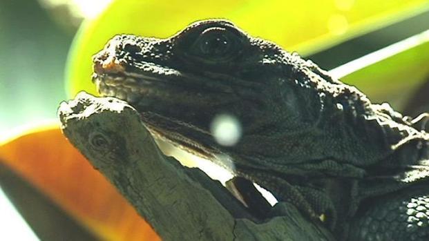 [DFW] Explore Land of Exotic Animals at MOLA
