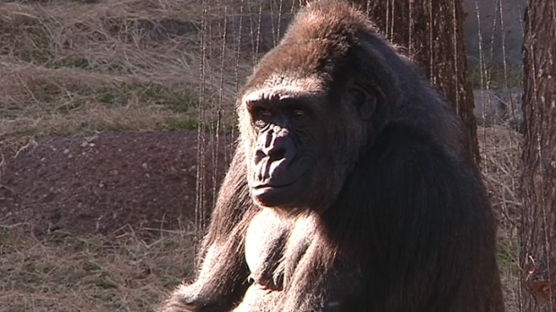 [DFW] Visit Wild Animals at the Fort Worth Zoo
