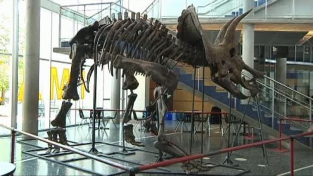 [DFW] Multimillion-Dollar Dinosaur Skeletons Go to Auction